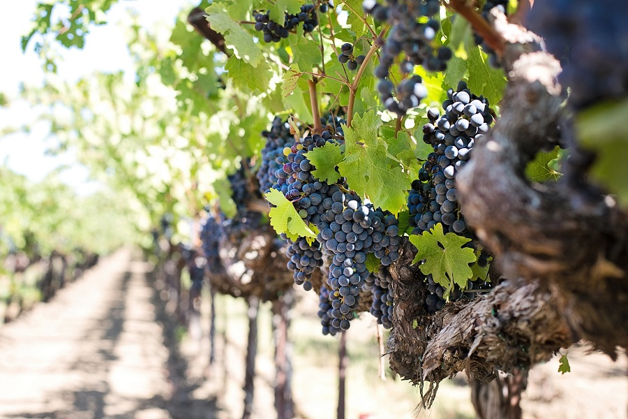 Visit Temecula for the many different things to do and now, add to that list, BOTTAIA Winery, a luxury destination in Temecula Valley. Things to do in Temecula   Temecula Wineries   Luxury Trips in California   Luxury Travel Tips   Travel Ideas