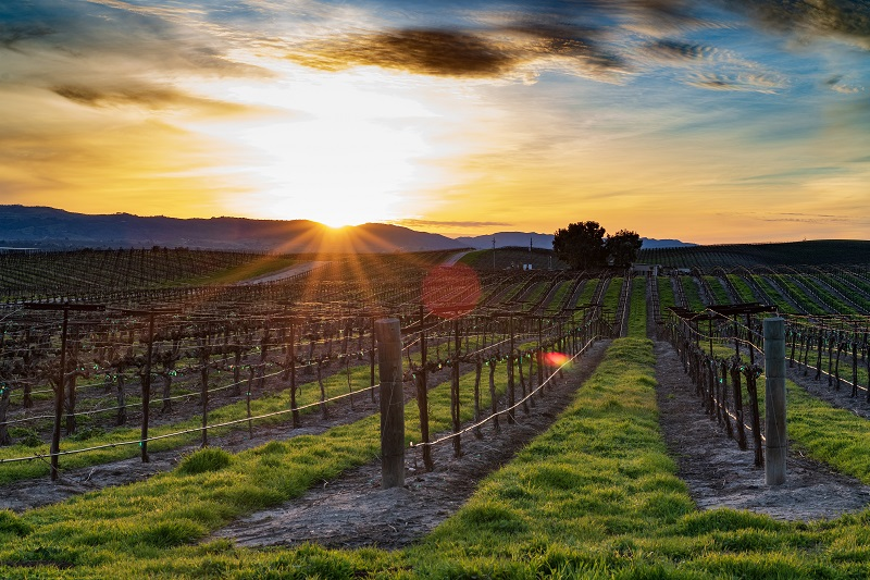 There are so many restaurants in Temecula Valley to enjoy on your next trip to Southern California's wine country!Where to Eat in Temecula | Best Restaurants in Temecula | best Restaurants in Orange County | Fine Dining in Temecula | Where to Eat in Temecula | Travel Tips | Temecula Travel Tips | Southern California Travel #california #travel