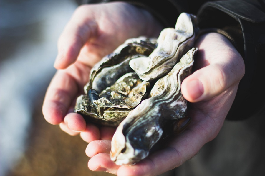 Find your favorite oysters at these Morro Bay oysters restaurants or try out one of these recipes and make them yourself. Where is Morro Bay | What to Eat in Morro Bay | Where to Get Fresh Oysters in California | Where to Get Oysters | How to Eat Oysters | Seafood Restaurants in Morro Bay | Morro Bay Travel Guide | Morro Bay Travel Tips #Travel #oysters