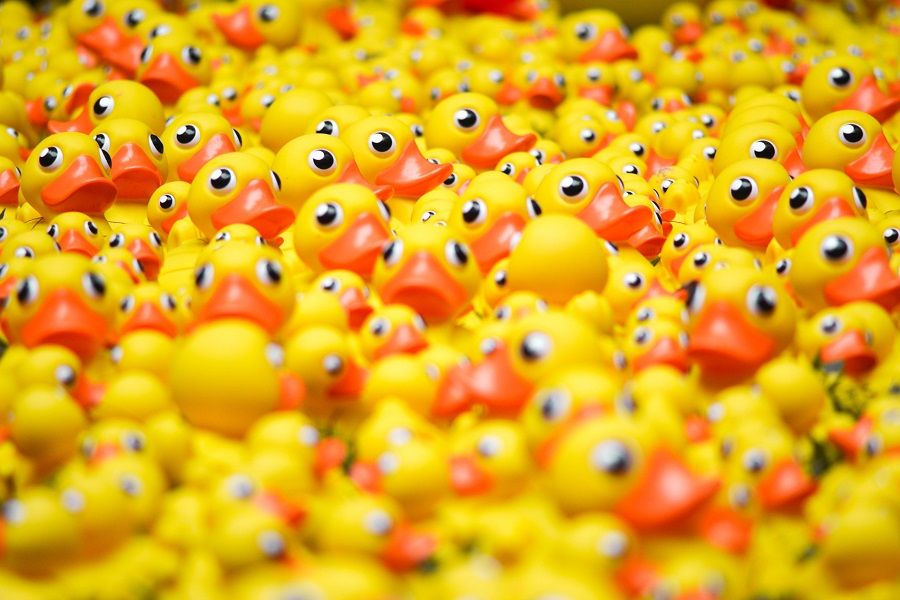 People dropped more than 63,000 rubber ducks into the Chicago River for the signature annual Chicago Ducky Derby benefiting Special Olympics Illinois. What is the Chicago Ducky Derby | How to Join the Chicago Ducky Derby | Where is the Chicago Ducky Derby | How to Help the Special Olympics | What is the Special Olympics