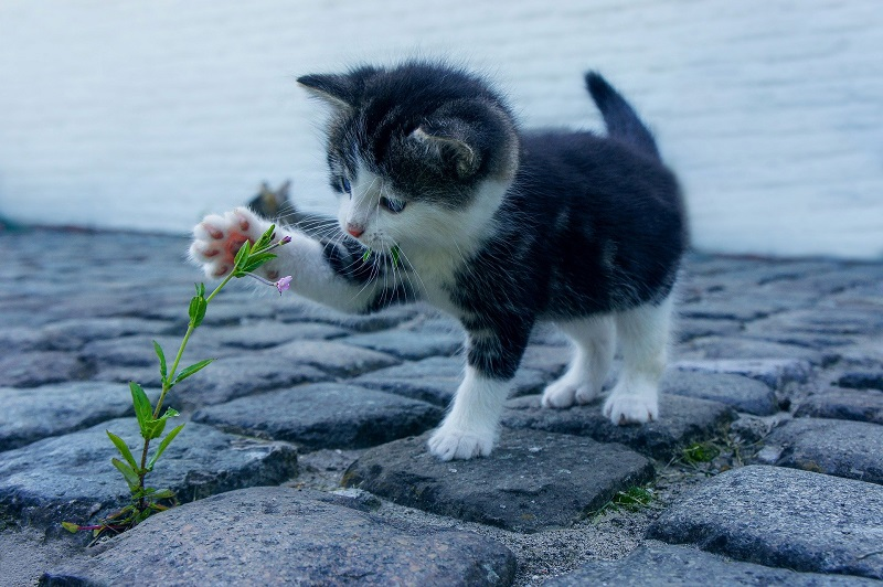 PureBites Cat Playing with A Plant
